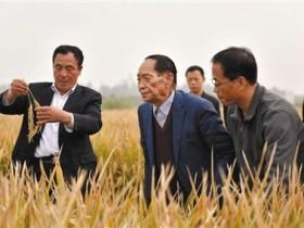 【GG扑克】袁隆平团队是如何创水稻亩产纪录的?